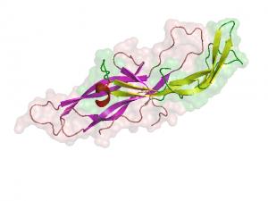 HCG - Gonadotrofina Corionica Humana