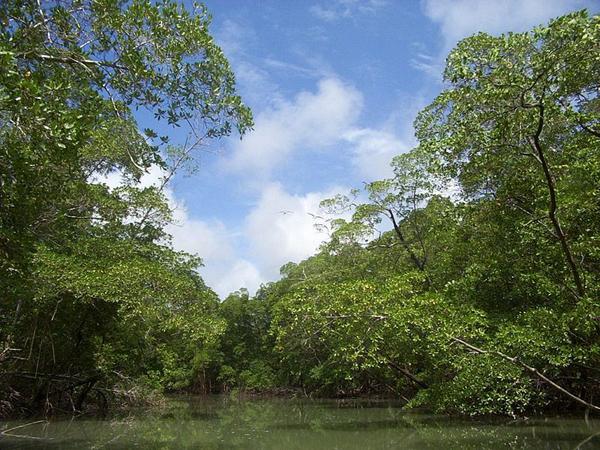 rio amazonas - Dia da Amazônia - 05 de Setembro