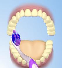 odontologia - Odontologia - Dentes Saudáveis