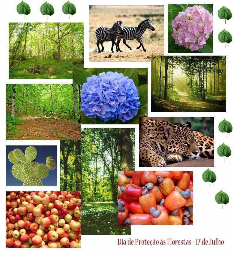 dia de protecao as florestas - Dia de Proteção às Florestas - 17 de Julho