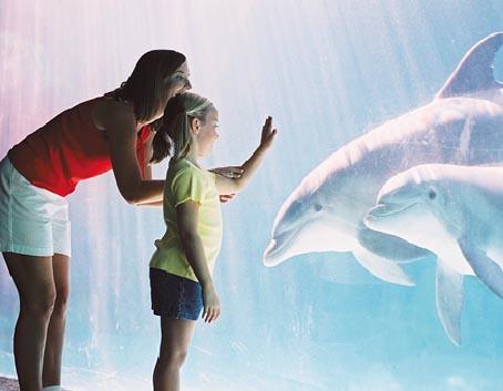 sea world - Os melhores parques aquáticos do mundo