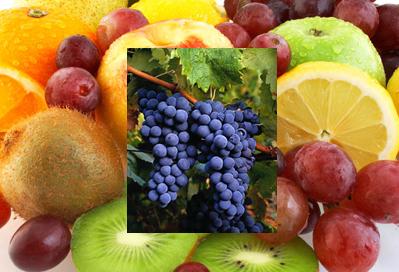 dicas nutricionista para os meses frios - Dicas da Nutricionista para os meses frios