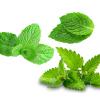 Chá de Ervas para a Saúde