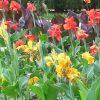 Oferecer flores - Um lindo gesto