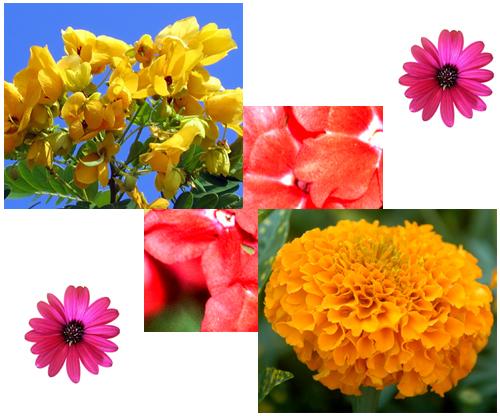 como cuidar das suas flores - Como cuidar das suas flores