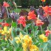 Tradição de oferecer flores em número ímpar