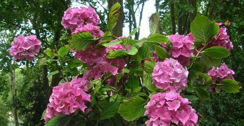 flores no terraco e varanda - Flores no Terraço ou Varanda