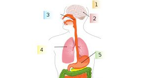 Diferenças entre Gripe Comum e Gripe H1N1